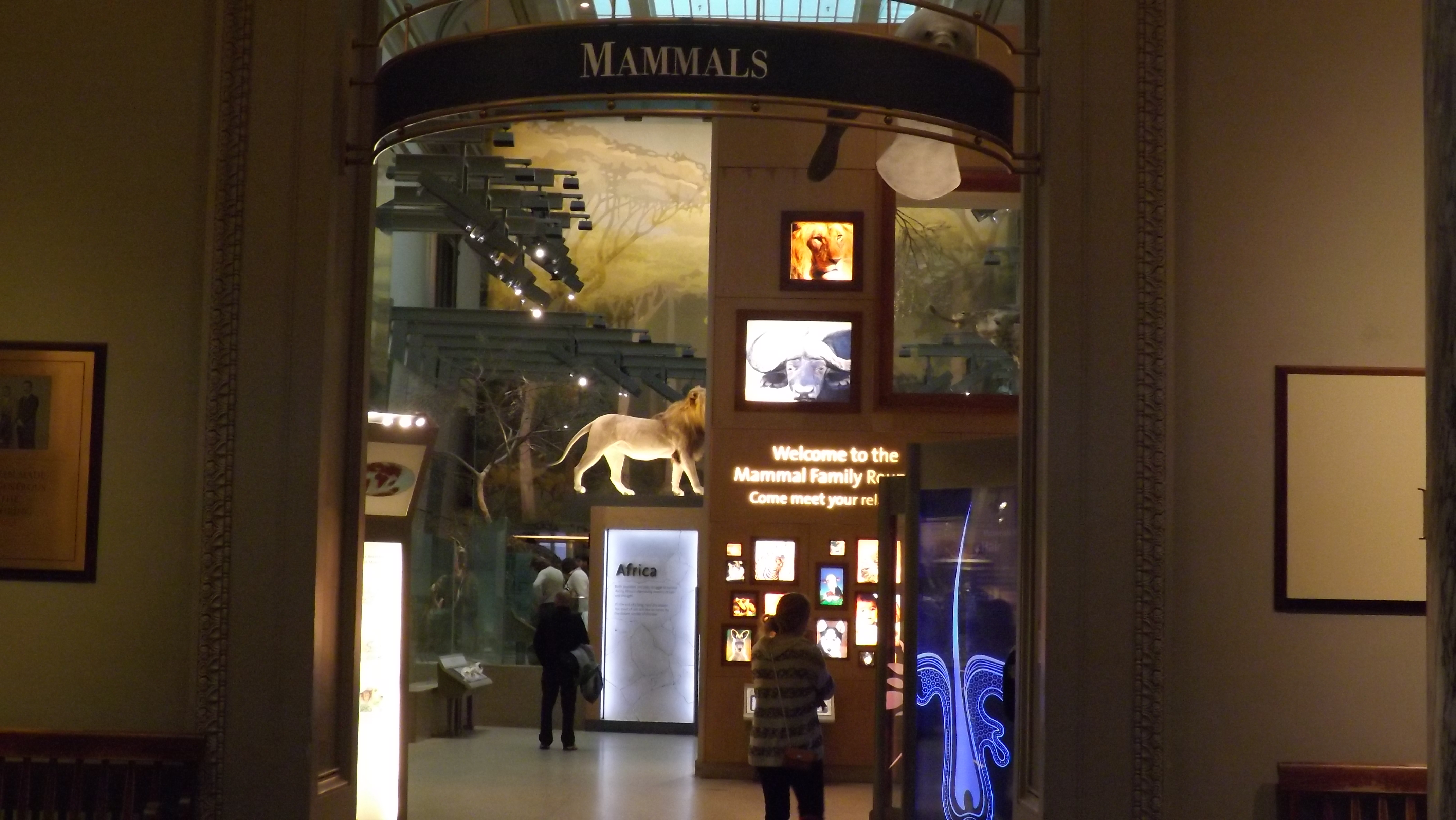 Figure 5. The Smithsonian Institution's Museum of Natural History, Mammals exhibition. 2014.