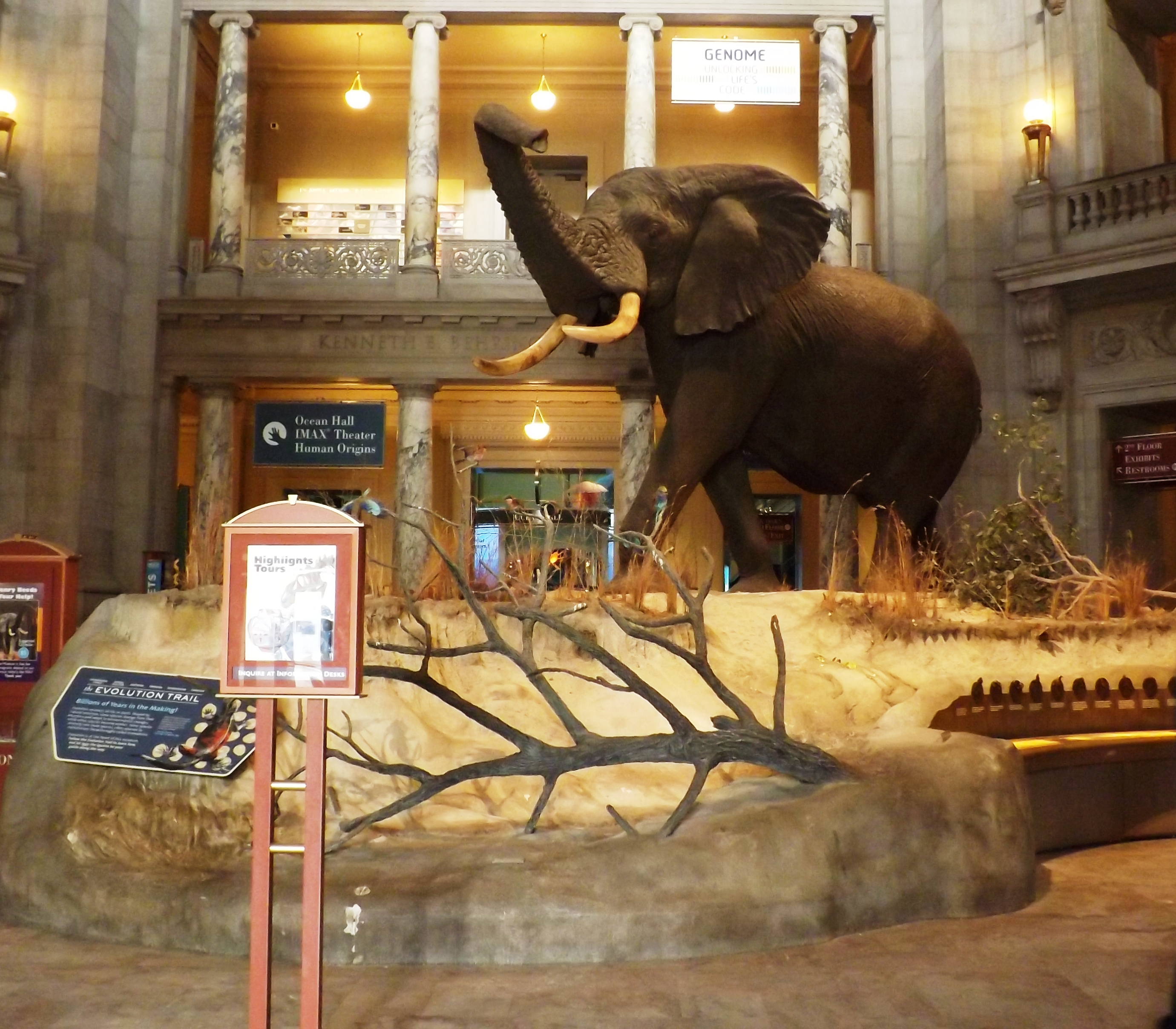 Figure 2. The Smithsonian Institution's Museum of Natural History entrance hall with Henry the elephant. 2014.