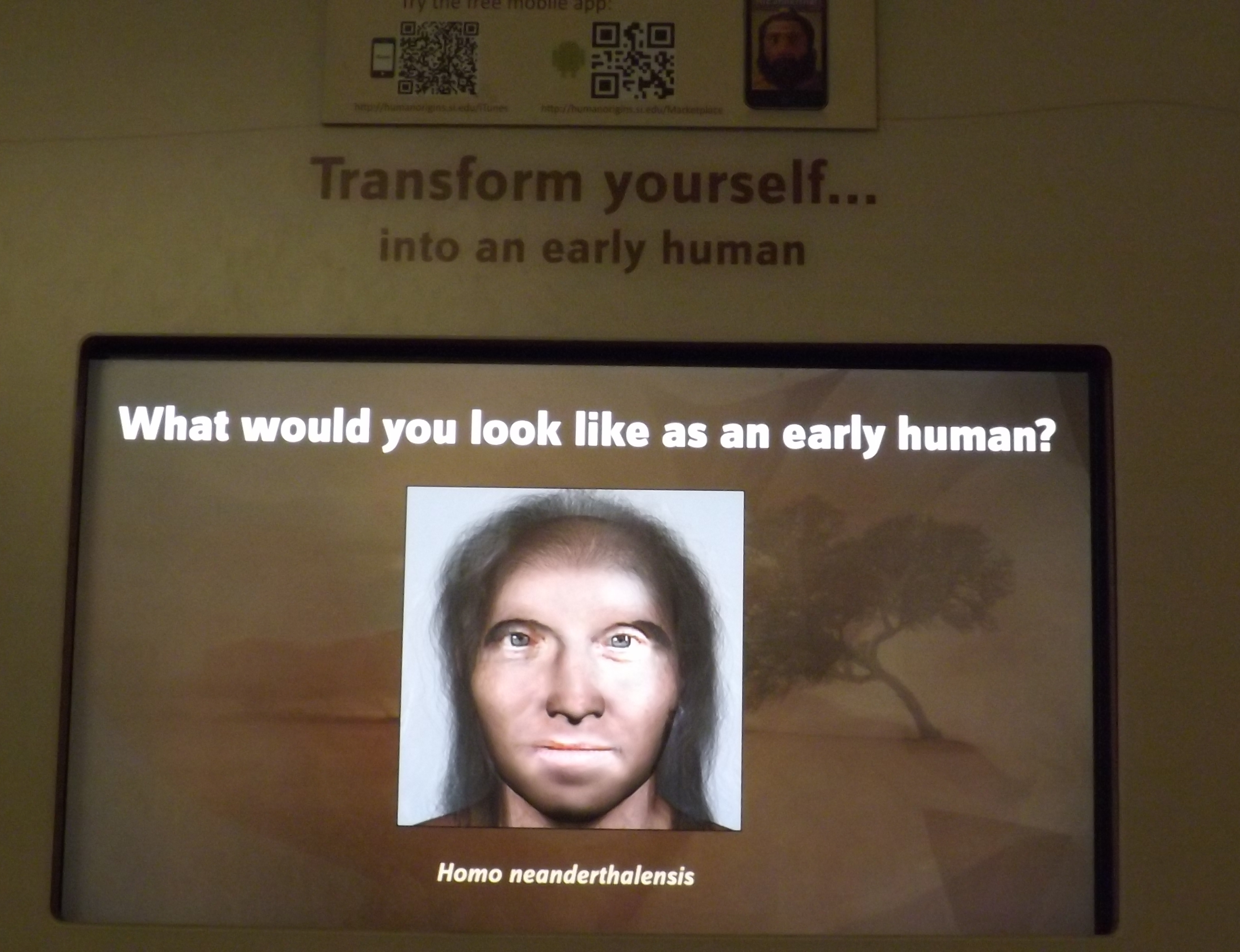 Figure 4. The Smithsonian Institution's Museum of Natural History interactive interpretive element. 2014.